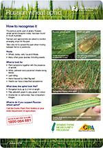 Russian wheat aphid - how to recognise it