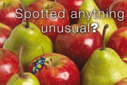 Apple & Pear Postcard