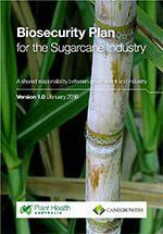 Sugarcane IBP
